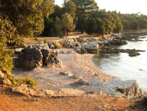 Golden cape papludimys Rovinj Kroatija